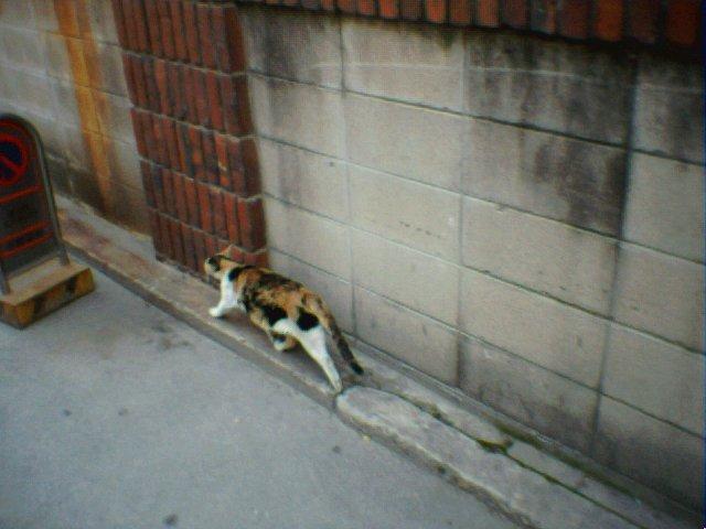 Upload:Set93_01(cat).jpg