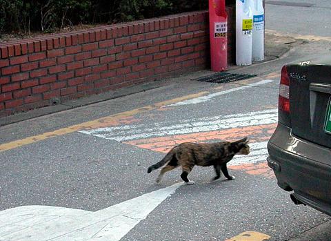 Upload:cat20041107-02.jpg