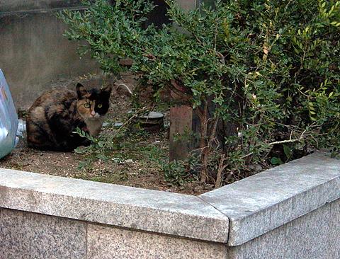Upload:cat20041107-03.jpg