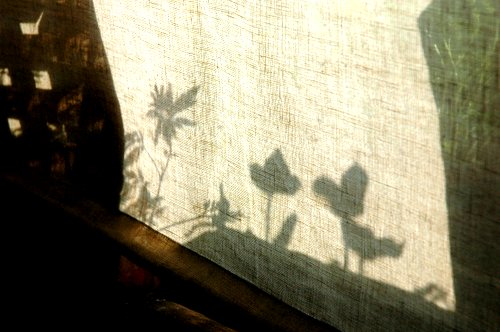 Upload:silhouette-1.jpg